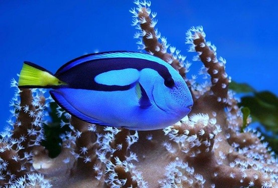 Photo:  Blue fish