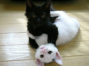 Photo:  Black cat White cat