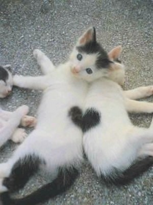 Photo:  cats hearts