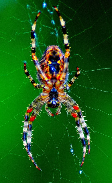 Photo:  Colourful spider