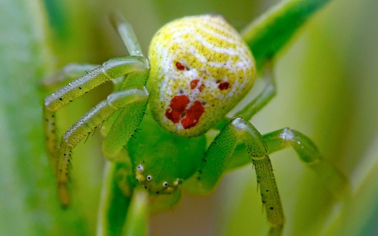 Photo:  clown spider