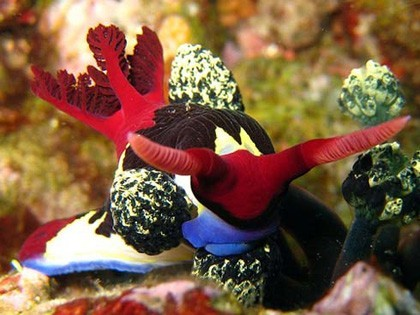 Photo:  beautiful nudibranch