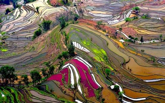 Photo:  Aerial photo of Rice Field Terraces in Yunnan, China