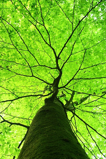 Photo:  Green Canopy Tree