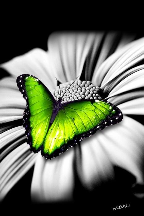 Pftw Green Color