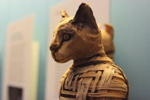 Photo:  BM The Cat Mummies