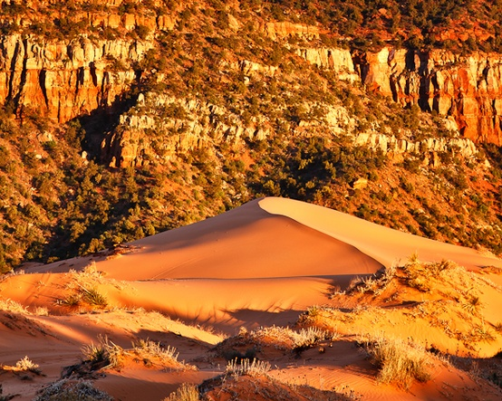 Photo:  Coral Pink Sand Dunes in Zion National Park