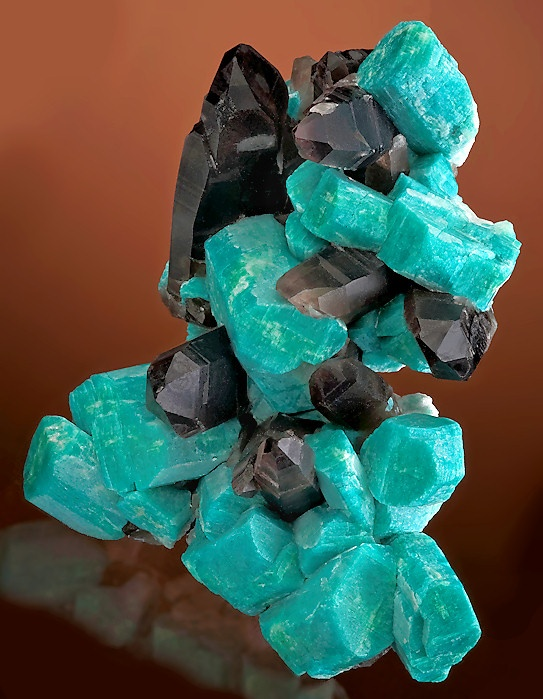 Photo:  Amazonite crystals with dark Smoky Quartz