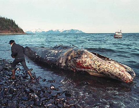 Photo:  The Exxon Valdez, has run aground off the Alaskan coast, releasing crude oil into the sea, causing one of the worst environmental disasters in US history