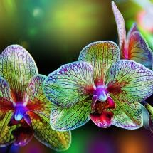 Photo:  Alien orchids