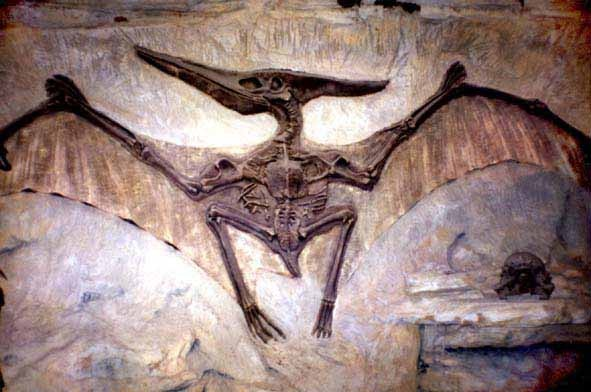 Photo:  Pterodactyl fossil