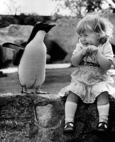 Photo:  Penguin