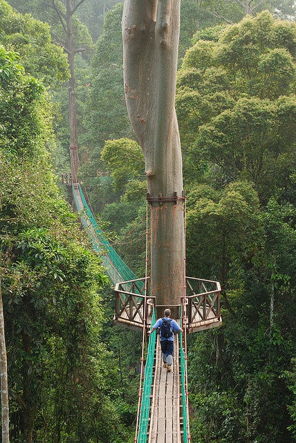 Photo:  Borneo Rainforest Canopy Walkway