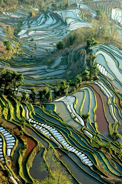 Photo:  Rice Fields of Yunnan, China
