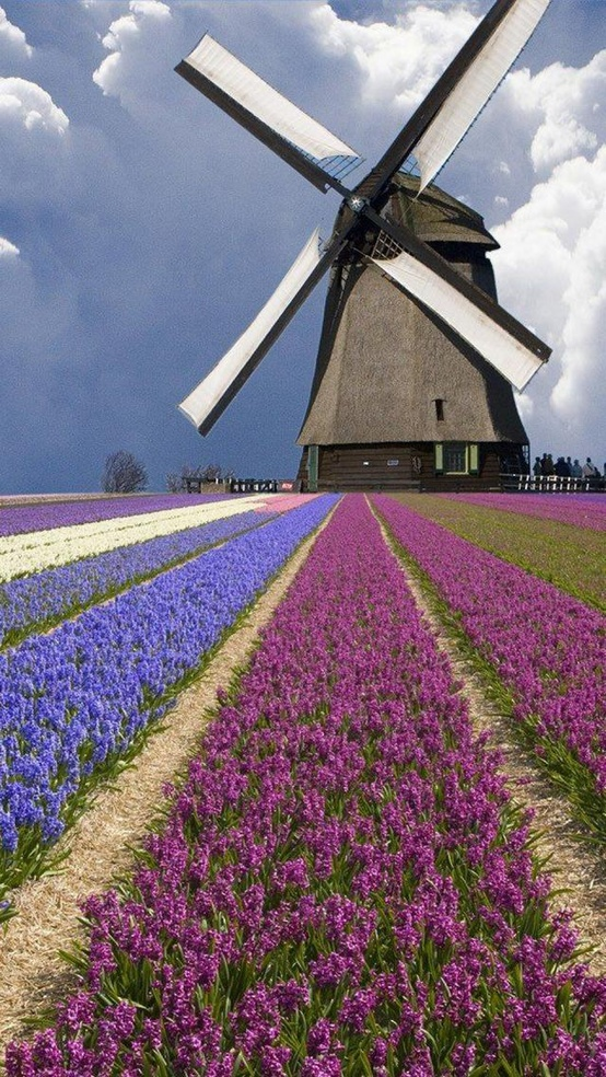 Photo:  Netherlands windmill