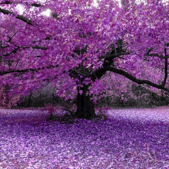 Photo:  All things purple