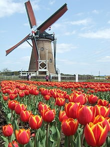 Photo:  windmills in Holland